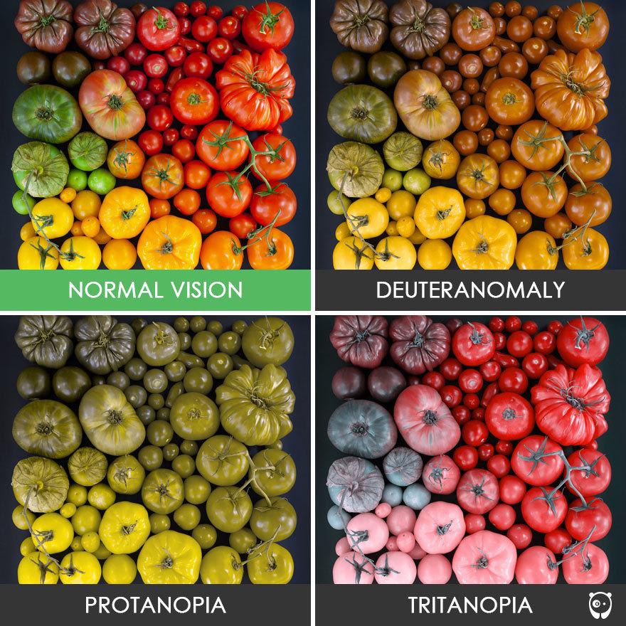 อาการตาบอดสี จะทำให้เหล่าผู้ป่วยมองเห็นสีผิดแปลกไปจากความเป็นจริง โดยโรค ตาบอดสี เกิดขึ้นจากเซลล์ประสาทชนิดหนึ่งในม่านตา  ที่มีการตอบสนองความไวต่อสีต่าง ๆ ...